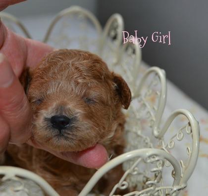 Baby Girl ..jpg