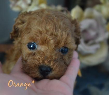 オレンジ1.jpg