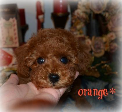 オレンジちゃん.jpg
