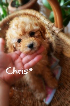 クリス.jpg