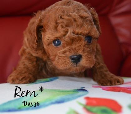 Ren36.jpg